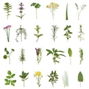 Rimedi omeopatici per le emorroidi - le piante